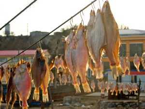Causes Of Esophageal Cancer (Dry Fish With Curing Agents)