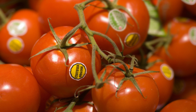 Lycopene Prevents Prostate Cancer