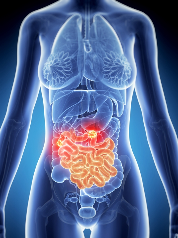 Digestive System And Gastrointestinal Disorders Net