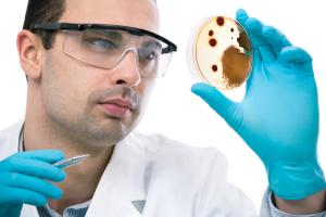 Sporotrichosis (Petri Dish Culture)