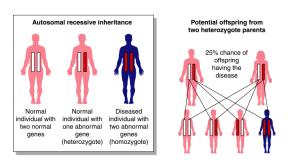 Chromosomal Abnormalities (Autosomal Recessive Inheritance)