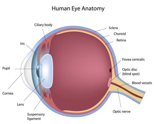 Optic Nerve Problems