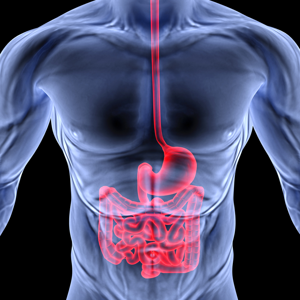 Anatomy Of The Esophagus - Net Health Book