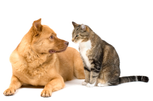 Creeping Eruption (Dog And Cat Can Transmit Hookworm To Humans)