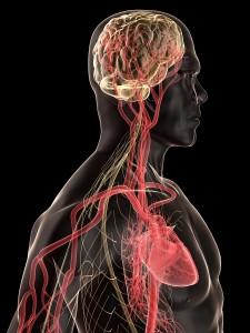 Vitamin D3 Benefits Both Heart And Brain