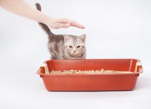 Toxoplasmosis (Cat Litter)