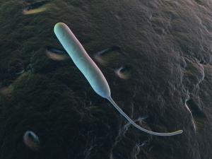 Traveler's Diarrhea (Campylobacter Jejuni)