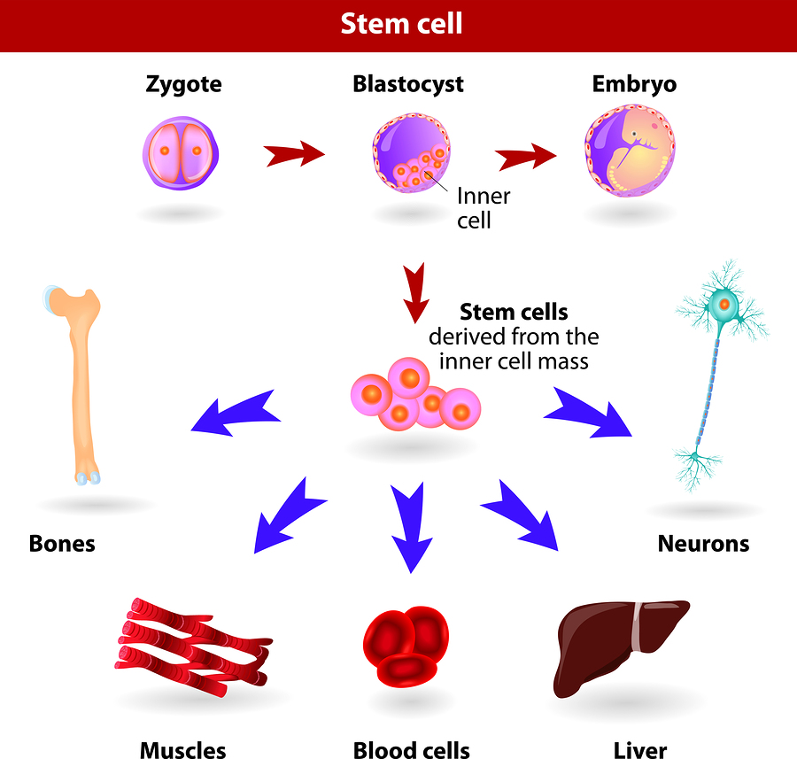Stem Cells As Future Therapy Net Health Book
