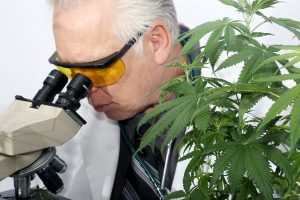 Cannabis Is Useless For Pain Control