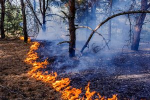 How Does Wildfire Smoke Affect Our Health?