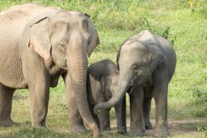 Elephants Hold The Secret To Lower Cancer Rates