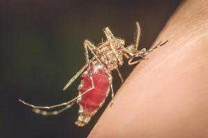 New Way To Diagnose Zika Virus