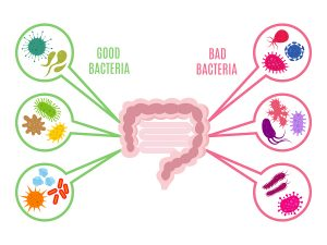 Beneficial Effects of The Mediterranean Diet on The Gut Flora