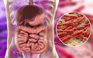 Gram-Negative Bacteria in the Gut Can Cause Cavernous Angiomas