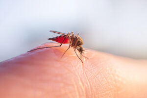 Why Do Mosquitoes Like Human Blood?